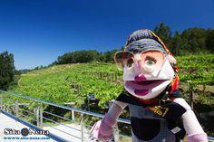Mar de Frades - Albariño wine #unexpectedlyunique of Bodega Mar de Frades (Finca Valiñas - Meis, PO) - Exploring Albariño wine, Rías Baixas, Galicia. Follow #sitanena family recipes, travel & much more at http://www.sita-nena.com/blog/  *Photo made by: Luis A.