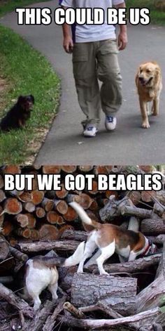 Walking a beagle ;-P This is so true, Gracie wants to smell and explore EVERYTHING.