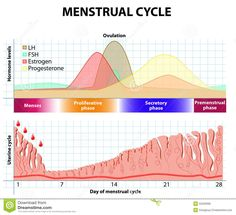How to Fix Your Period Without Birth Control http://www.corespirit.com/fix-period-without-birth-control/ Dealing with an abnormal menstrual cycle? Has your period stopped completely for no clear reason? This article will help you recover a healthy period using diet and lifestyle changes – without resorting to birth control use. Having a healthy, normal period is incredibly important for...