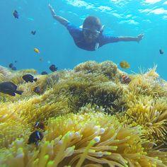 When you are in harmony with yourself, everything unfolds with grace and ease - Panache Desai. #newbali  #klooktravel #bali #indonesia #baliholiday #exploreindonesia #explorebali #peoplewhodofunstuff #iphonesia #vscocam #lingkarindonesia #liburanbali #thebaliguideline #thebaliguideliners #thebalibible #balibible #ocean #snorkeling #menjangan #doyoutravel #love #peace #earth #sea #coral #reef #paradise #goprobali #gopro