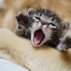 15 Extremely Cute Newborn Kittens We Just Had To Share