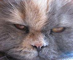 »»» Krafttiere Bedeutung: Katzen mag man entweder, oder man hasst sie...  #krafttiere