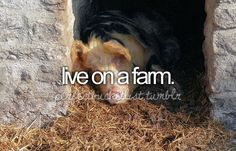 I will live on a farm someday & I'll raise happy cows and chickens!