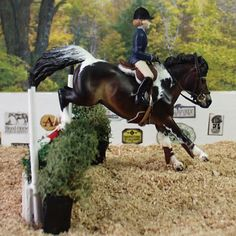 Flitwick under saddle! With a rider yet!