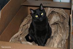 #black #cat *Photography by Clarissa Johal