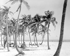 Beach at Crandon Park. We went here when I was a kid!!