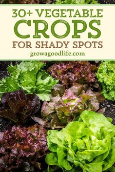 Shade garden 313492824065680730 - There are plenty of vegetables that grow in shade, dappled sunlight, or with as little as hours of sunlight per day. Discover 30 vegetable crops that you can grow in shady parts of your garden. Source by GrowAGoodLife Spring Vegetable Garden, Vegetable Garden Planner, Vegetable Garden For Beginners, Veg Garden, Edible Garden, Summer Garden, Vegetable Gardening, Small Vegetable Gardens, Planting Vegetables