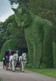Beautiful Cats, Big And Beautiful, Beautiful Gardens, Beautiful Homes, Beautiful Places, House Beautiful, Topiary Garden, Garden Art, Garden Design