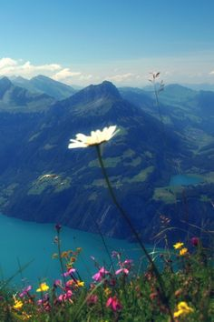 Don't know where this is, but it reminds me of Switzerland :-D