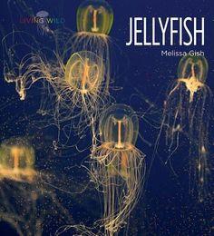 Jellyfish, Melissa Gish, 9781608185689, 11/19/15