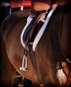 Nothing looks prettier than clean tack on a clean horse <3
