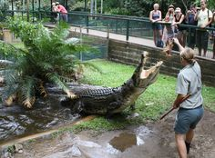 crocodile feeding at Cairns Tropical Zoo Gold Coast Australia, Western Australia, Australia Travel, The Places Youll Go, Places To Visit, City Of Adelaide, Daintree Rainforest, Thinking Day, Queensland Australia