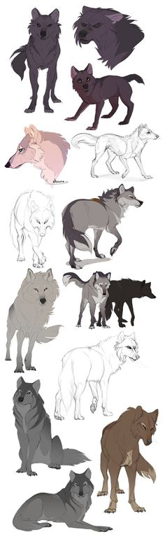 How to draw wild wolves fox coyote dog canine