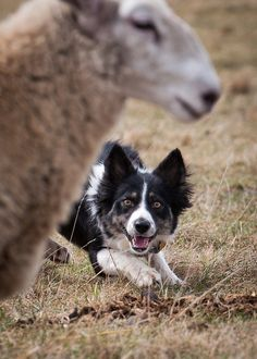 Tips for Better Dog Photography
