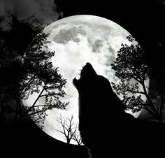 Howling by the Light of the Moon II.                                                                                                                                                                                 More