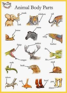 Animal body parts English vocabulary - Trunk, shell, whiskers etc English Time, English Fun, English Study, English Class, English Words, English Lessons, English Grammar, Learn English, French Lessons
