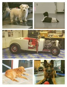 We love it when customers send us pictures of their garages. We love it even more when those photos also include dogs! Garage Floor Mats, Garage Flooring, Buddy Love, Cool Garages, Dog Photos, Hot Cars, Hanging Out, Cute Dogs, Floors