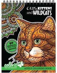 Cats, Kittens, and Wildcats By Terbit Basuki