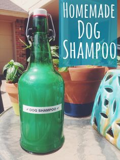 your dog needs a bath. here's a natural homemade dog shampoo that should do the trick. it smells yummy and moisturizes their furry little coat like a dream.