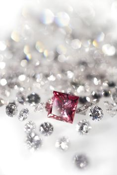 Shop for an exquisite range of diamond jewellery, diamond engagement rings, wedding rings, earrings, bracelets and men's jewellery at Cerrone Australia. Argyle Pink Diamonds, Handcrafted Jewelry, Diamond Engagement Rings, Diamond Jewelry, Wedding Rings, Jewellery, Atelier, Handmade Chain Jewelry, Diamond Jewellery