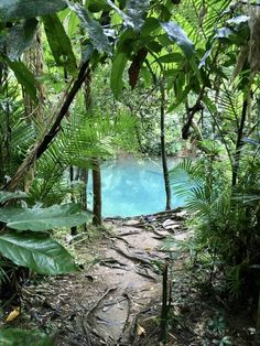 Discover the Daintree's best kept secret | Thrifty Drifting Camping Aesthetic, Nature Aesthetic, Travel Aesthetic, Queensland Australia, Australia Travel, Western Australia, Rainforest Project, Daintree Rainforest, Beautiful Places To Travel