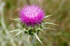 You may find it surprising, but milk thistle will help you.