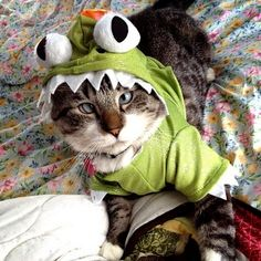crosseyed dino kitty