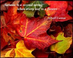 Autumn is a second spring when every leaf is a flower. - Albert Camus #quote