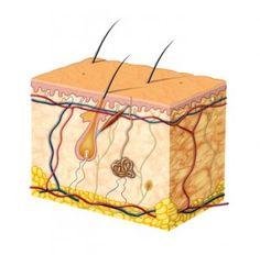 Die Elektrologie ist die dauerhafte Haarentfernung mit Strom und der Sonede. http://www.ulrike-maldoff.ch/dauerhafte-haarentfernung/elektrologie/