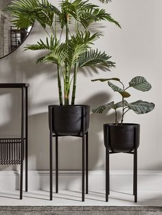 Living Room Plants, House Plants Decor, Plant Decor, Living Room Decor, Bedroom Decor, Large Indoor Planters, Indoor Flower Pots, Indoor Plant Pots, Black Planters