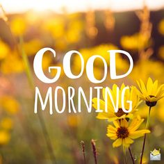 Good morning image with flowers. Latest Good Morning Images, Good Morning Beautiful Pictures, Good Morning Images Flowers, Good Morning Inspiration, Good Morning Picture, Good Morning Good Night, Morning Pictures, Morning Flowers, Good Morning Letter