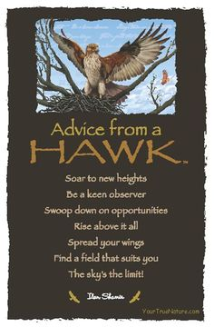 Spirit Totem Animals:  #Advice from a #Hawk. Awesome! Maybe some advice from your grandfather during this difficult time...? ... ... ... ... ... ... ...