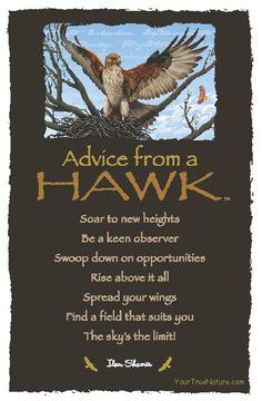 Spirit Totem Animals:  #Advice from a #Hawk.