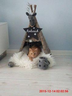 5-Cat Houses