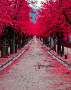 Fuchsia way
