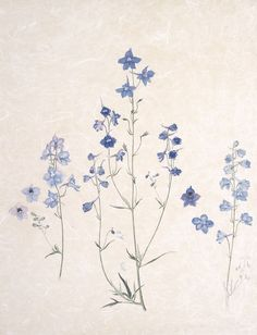 little augury: Deborah, Duchess of Devonshire DELPHINIUMS by Emma Tennant - color.I think blue - Tattoo