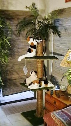 """60"""" Kitty Palm Cat Tree Crazy Cat Lady, Crazy Cats, Oriental Cat, Cat Tree, Popsicle Sticks, Travel Themes, Cool Cats, Palm, Kitty"""