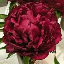 Peonies Pronunciation Peonies Red Peonies Planting Peonies Flowers Uk