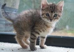 In honor of #NationalCatDay, we bring you a very cute gallery, with photos from some of you!