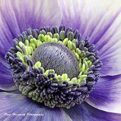 Anemone ## by Paul  Heijmink on 500px