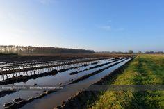 Een ochtend met mooi licht rond Apeldoorn op vrijdag 21 november 2014