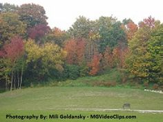 Fall, Toronto, ON, Canada Golf Courses, Canada, Toronto, Plants, Photography, Fall, Autumn, Flora, Plant