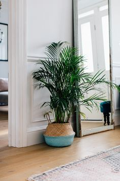 Palm In An Entryway - Entrance Hall Of A London Victorian Villa