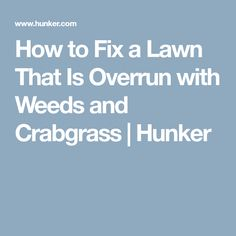 How to Fix a Lawn That Is Overrun with Weeds and Crabgrass | Hunker