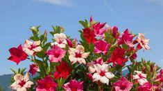 Summer Flowers, Yellow Flowers, Colorful Flowers, Beautiful Flowers, Organic Nutrients, Organic Mulch, Fertilizer For Plants, Invasive Plants, Evergreen Shrubs