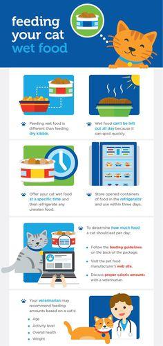 In The Can Wet Food Feeding Guidelines Katzenworld Wet Cat