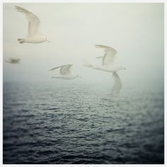 """""""Don't believe what your eyes are telling you. All they show is limitation. Look with your understanding. Find out what you already know and you will see the way to fly.""""  ― Richard Bach, Jonathan Livingston Seagull"""