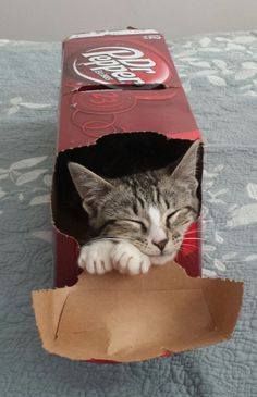 And this cat, who is dreaming of next Christmas. Only 364 days to go! | 23 Cats Who Are So Ready For Boxing Day