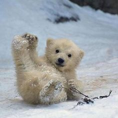 Baby Polar Bear...so cute!!!
