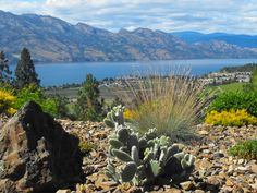 Our Cactus Garden and view over Lake Okanagan at Lakeview Memories Boutique  B & B, Okanagan Valley, Canada,  #travel, #gardening